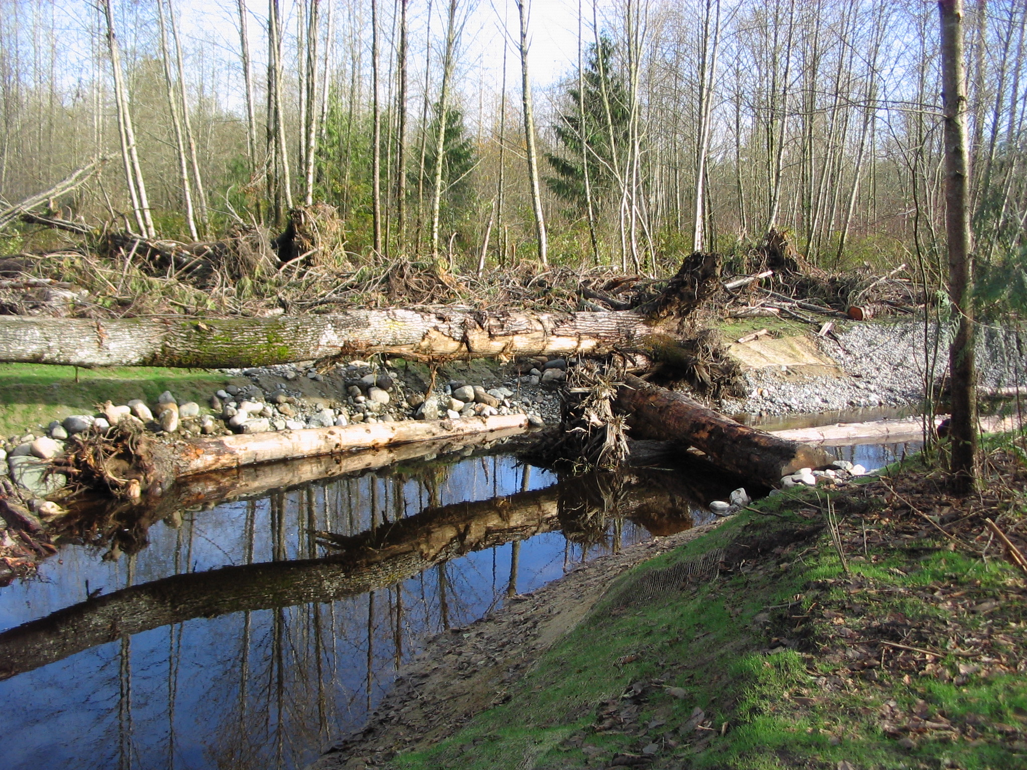 Tulalip Tribes Natural Resources Department news link to Everett Herald Story – Tulalip Tribe Restores Wildlife Habitat with image of stream restoration