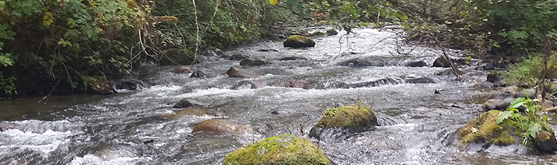 Tulalip Natural Resources Department image of robustly flowing stream
