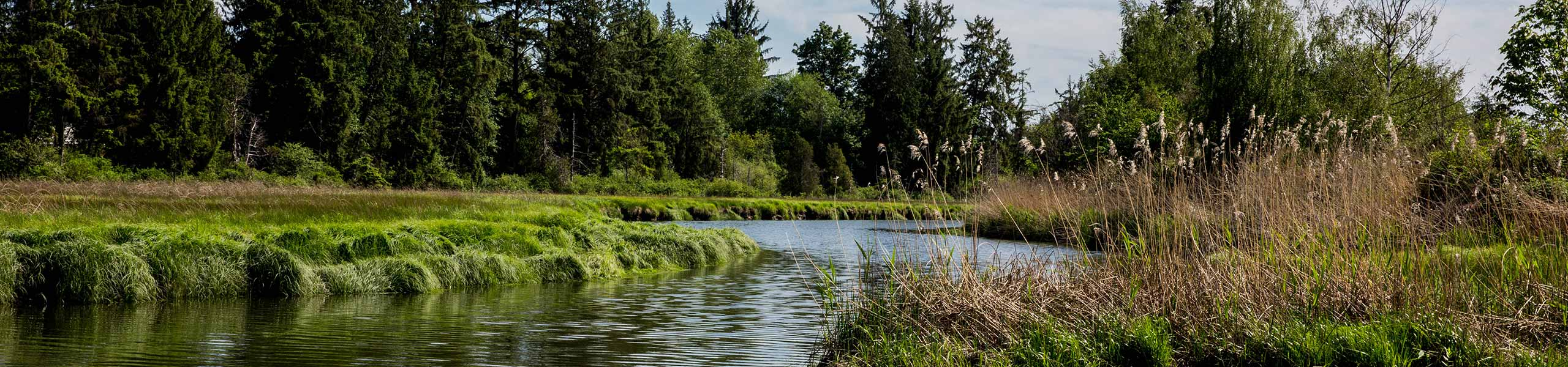 Tulalip Tribes Natural Resources Department image of wetland with forested and cleared habitat