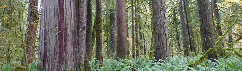 Natural Resources Forestry header image