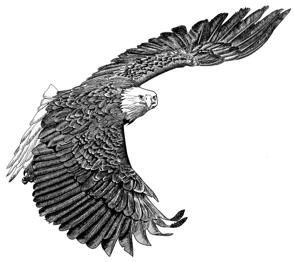 Tulalip Natural Resources Department line art of bald eagle in flight