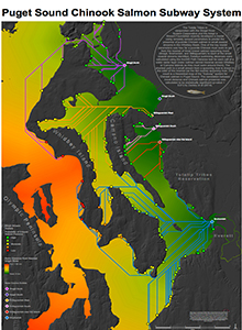 Puget Sound Chinook Salmon Subway System