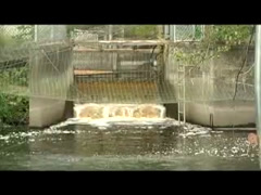 Tulalip Matters: Hatchery Coho Release video