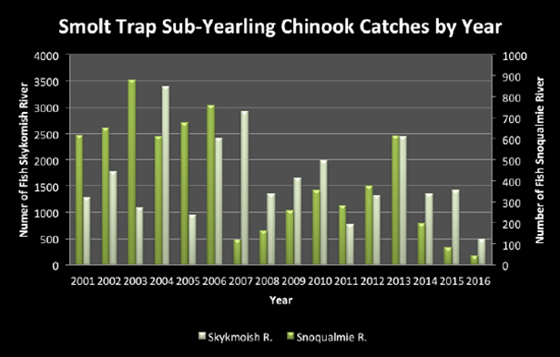 Tulalip Natural Resources Department image of smolt trap outmigration chart