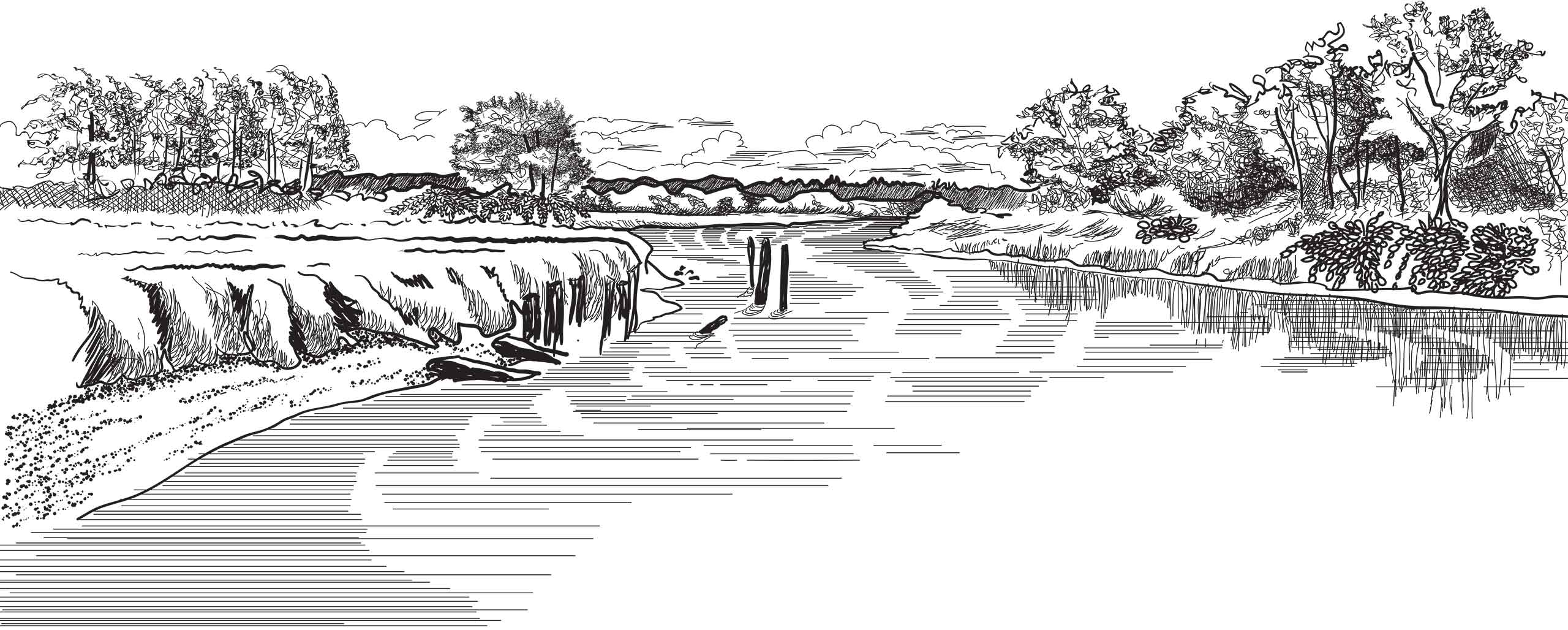 Tulalip Natural Resources Department line art image of forest or wetland area